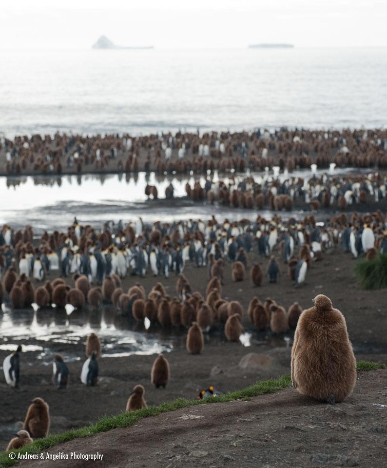 aka-Antarctic-Quest-2009-01-28__D3X10807.jpg