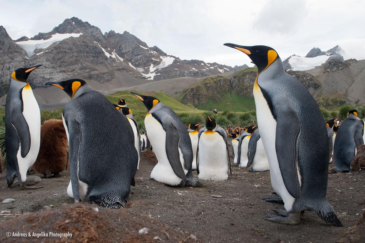 aka-Antarctic-Quest-2009-01-29__D3X11927.jpg