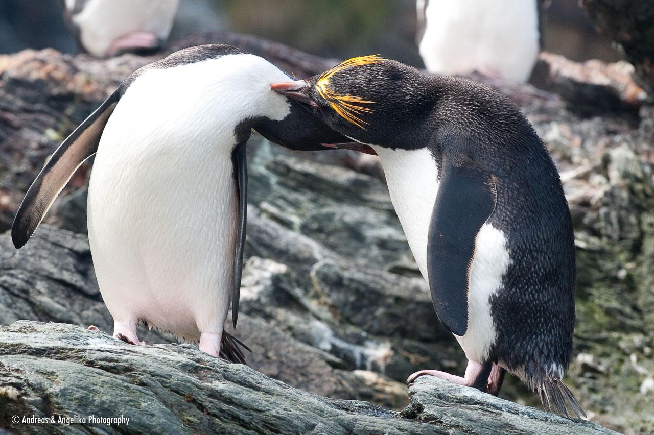 aka-Antarctic-Quest-2009-01-29__D3X12310.jpg