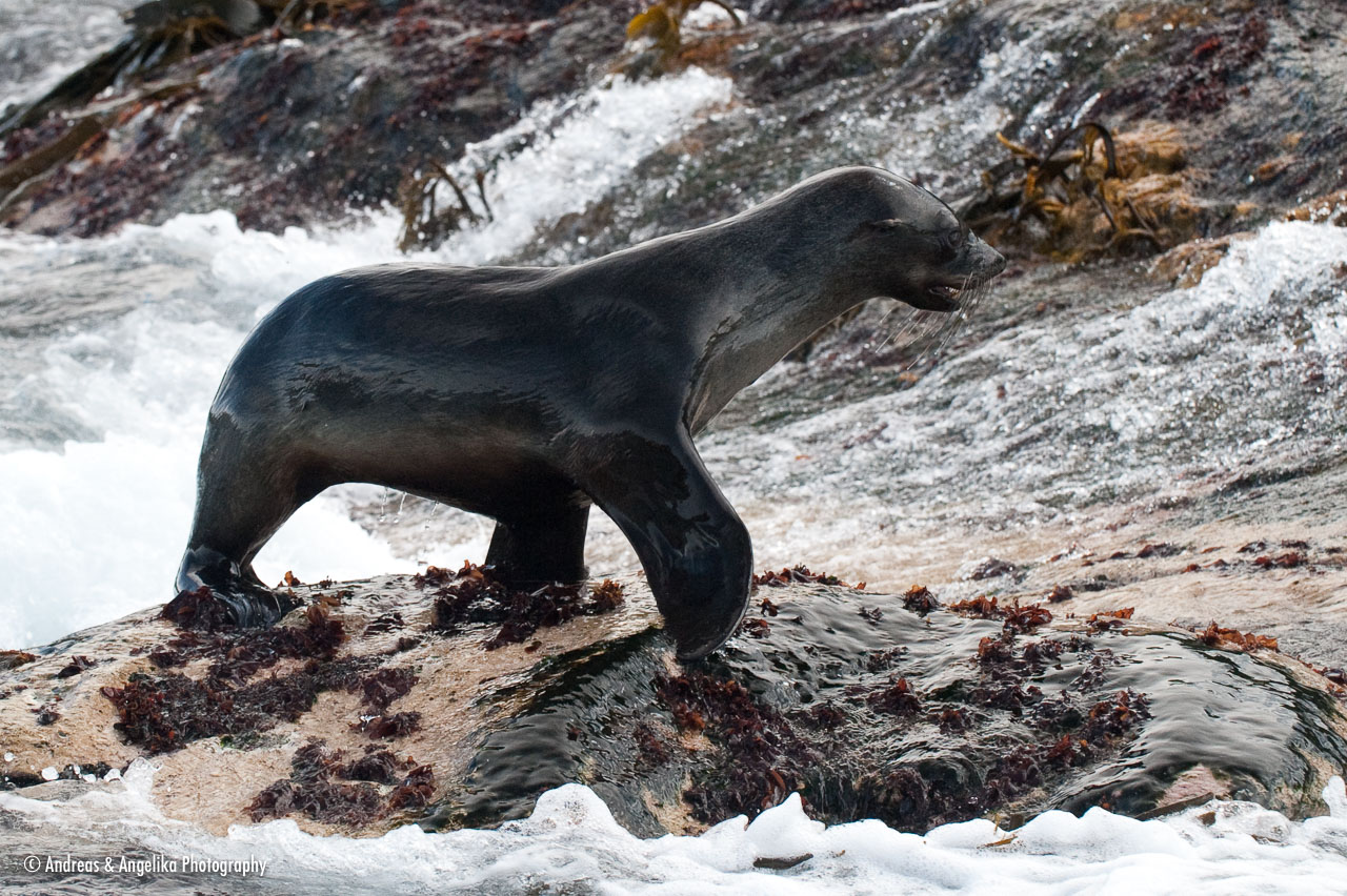 aka-Antarctic-Quest-2009-01-29__D3X12320.jpg