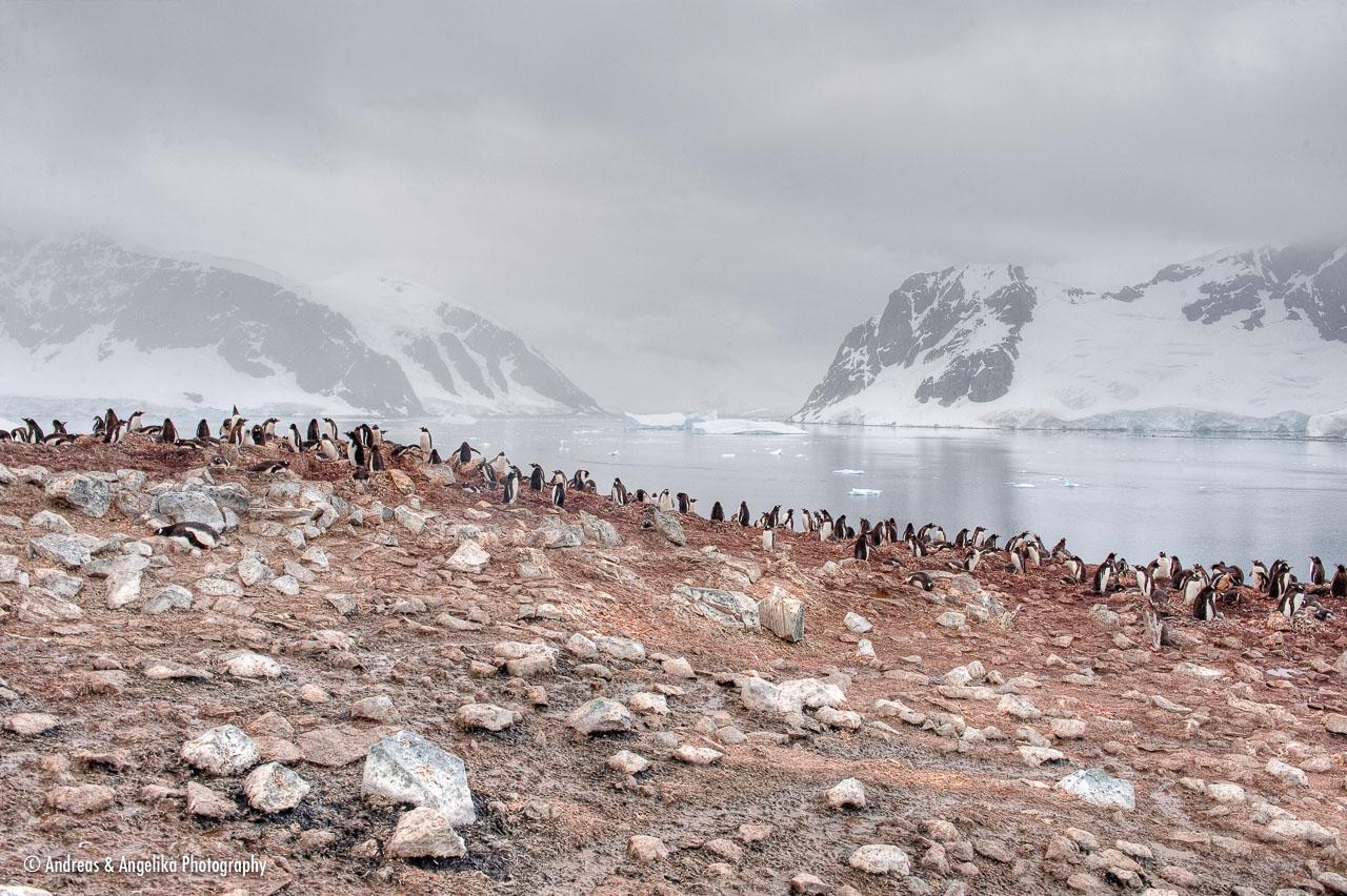 aka-Antarctic-Quest-2009-02-03__D3X16649-51.jpg