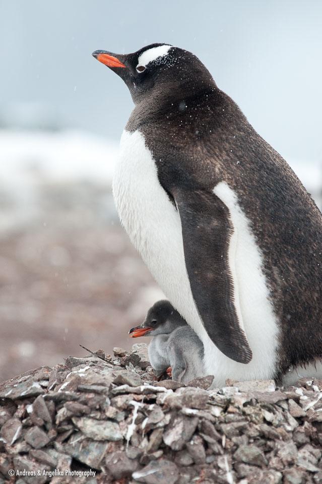 aka-Antarctic-Quest-2009-02-03__D3X16725.jpg