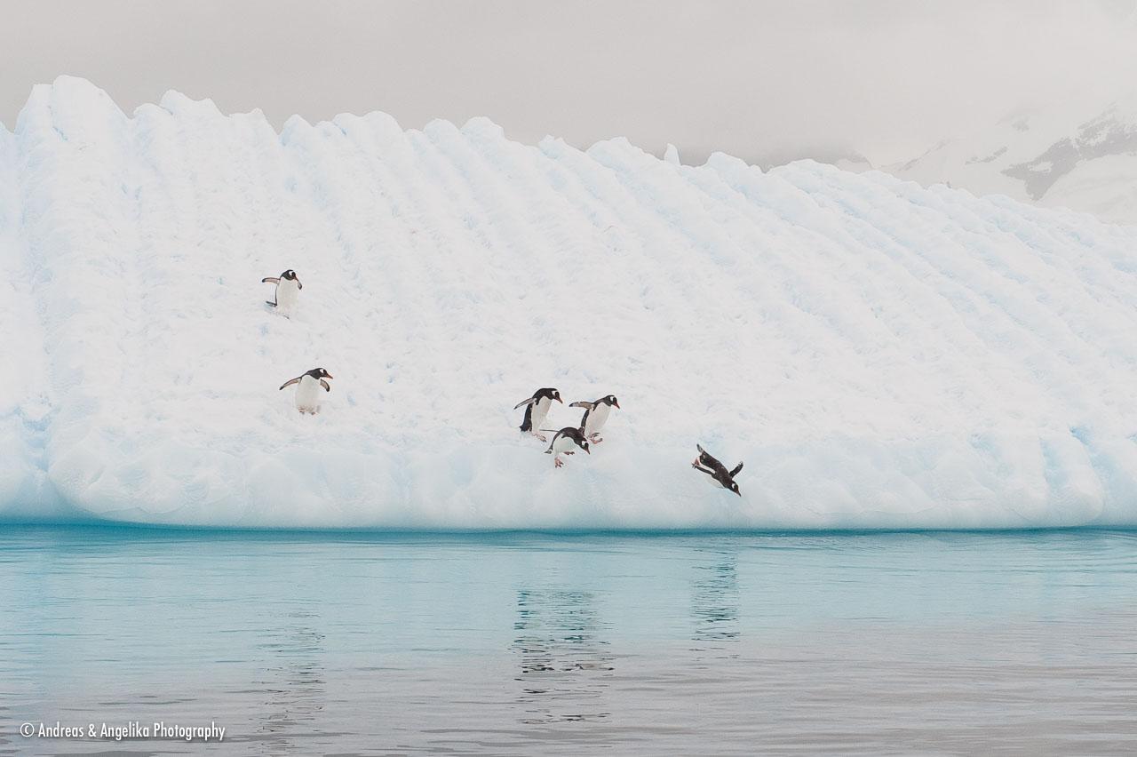 aka-Antarctic-Quest-2009-02-03__D3X16995.jpg
