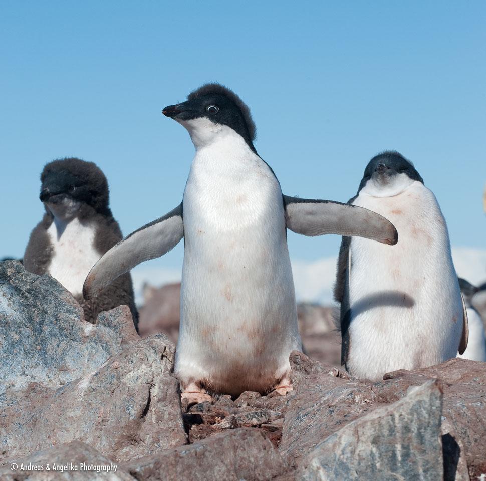 aka-Antarctic-Quest-2009-02-04__D3X18048.jpg