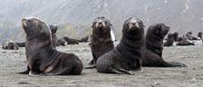 aka-Antarctic-Quest-2009-01-26__D3X8437.jpg