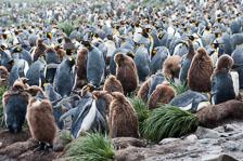 aka-Antarctic-Quest-2009-01-26__D3X8840.jpg