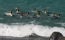 aka-Antarctic-Quest-2009-01-27__D3X10534.jpg