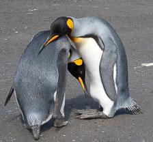 aka-Antarctic-Quest-2009-01-27__D3X9922.jpg