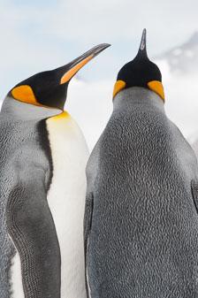 aka-Antarctic-Quest-2009-01-27__D3X9934.jpg