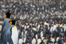 aka-Antarctic-Quest-2009-01-28__D3X10854.jpg
