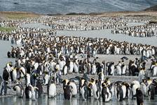 aka-Antarctic-Quest-2009-01-28__D3X11037.jpg