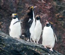 aka-Antarctic-Quest-2009-01-29__D3X12187.jpg