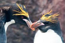 aka-Antarctic-Quest-2009-01-29__D3X12196.jpg