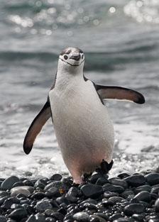 aka-Antarctic-Quest-2009-02-02__D3X14258.jpg