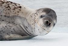 aka-Antarctic-Quest-2009-02-03__D3X16962.jpg