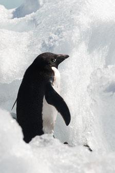aka-Antarctic-Quest-2009-02-04__D3X17687.jpg