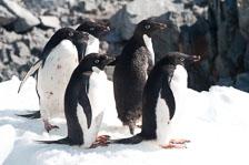 aka-Antarctic-Quest-2009-02-04__D3X17717.jpg