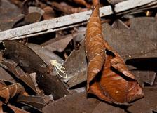 aka-Cuyabeno-2009-12-31__D3X20040.jpg