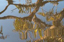 aka-Cuyabeno-2010-01-01__D3X20721.jpg