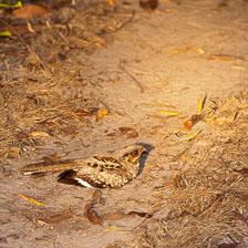 aka-Pantanal-2011-08-06__D3X4552.jpg