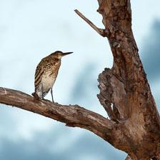 aka-Pantanal-2011-08-07__D3X4561.jpg