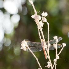 aka-Pantanal-2011-08-07__D3X4586.jpg