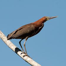 aka-Pantanal-2011-08-08__D3X4868.jpg