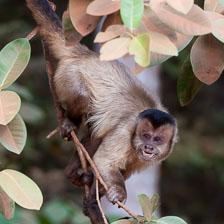 aka-Pantanal-2011-08-09__D3X5079.jpg