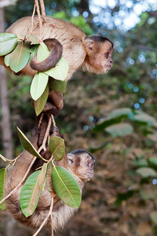 aka-Pantanal-2011-08-09__D3X5091.jpg