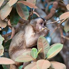 aka-Pantanal-2011-08-09__D3X5134.jpg