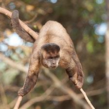 aka-Pantanal-2011-08-09__D3X5162.jpg