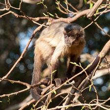 aka-Pantanal-2011-08-09__D3X5205.jpg