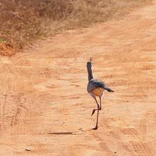 aka-Pantanal-2011-08-10__D3X5403.jpg