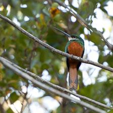 aka-Pantanal-2011-08-11__D3X5589.jpg