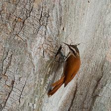 aka-Pantanal-2011-08-12__D3X6161.jpg