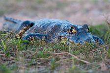aka-Pantanal-2011-08-12__D3X6400.jpg