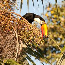 aka-Pantanal-2011-08-13__D3X6446.jpg