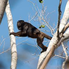 aka-Pantanal-2011-08-13__D3X6621.jpg