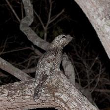 aka-Pantanal-2011-08-13__D3X6956.jpg