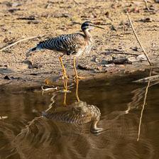 aka-Pantanal-2011-08-14__D3X7059.jpg