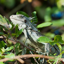 aka-Pantanal-2011-08-14__D3X7089.jpg