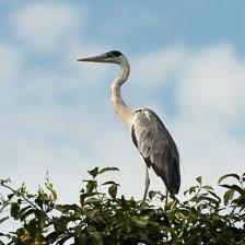 aka-Pantanal-2011-08-14__D3X7189.jpg