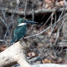 aka-Pantanal-2011-08-14__D3X7232.jpg