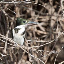 aka-Pantanal-2011-08-14__D3X7282.jpg