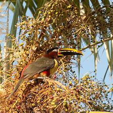 aka-Pantanal-2011-08-15__D3X7518.jpg