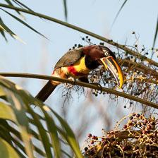 aka-Pantanal-2011-08-15__D3X7538.jpg