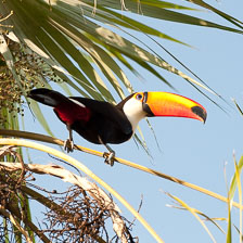 aka-Pantanal-2011-08-15__D3X7572.jpg