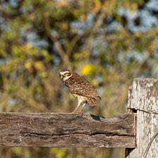 aka-Pantanal-2011-08-15__D3X7594.jpg