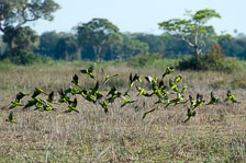 aka-Pantanal-2011-08-15__D3X7623.jpg