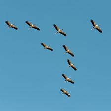 aka-Pantanal-2011-08-15__D3X7799.jpg
